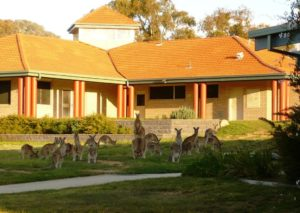 Kangaroos-near-building2_sml